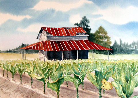 Barn,with,Tobacco,still,standing,half,cropped,Art,Print,Giclee,tobacco_barn,farm_scene,rusty_tin,landscape,farmscape,tin_roof,tobacco,green,brown,watercolor,giclee,inks,watercolor paper