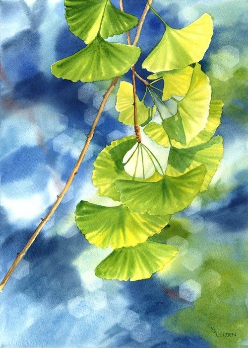 Ginkgo leaves against a blue background - product images
