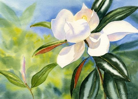 Lightfilled,southern,magnolia,blossom,Art,Print,Giclee,flower,white,blue,print,paper,ink