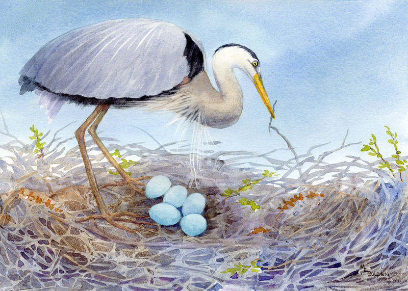 Mother's Love Great Blue Heron and 5 eggs - product images