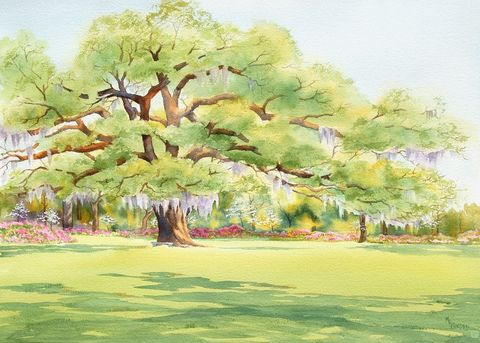 Airlie,Oak,Art,Print,Giclee,print,watercolor,oak_tree,spring,green,wweteam,paper,live oak