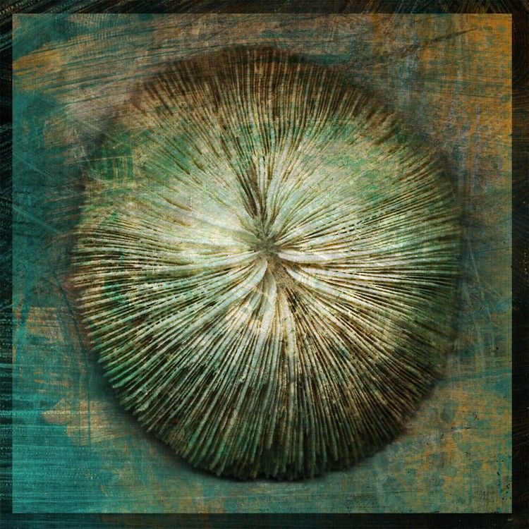 Mushroom Coral No. 1 - 8 in x 8 in Altered Photograph - product images