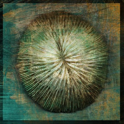 Mushroom,Coral,No.,1,-,8,in,x,Altered,Photograph,Art,Photography,Digital,surreal,nature,texture,altered,seashell,coral,mushroom,white,paper,ink