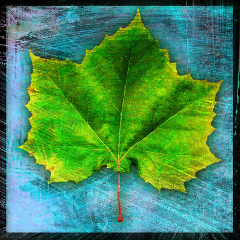 Sycamore,Leaf,No.,1,-,8,in,x,Altered,Photograph,Art,Photography,Digital,surreal,nature,texture,altered,leaf,blue,sycamore,green,paper,ink
