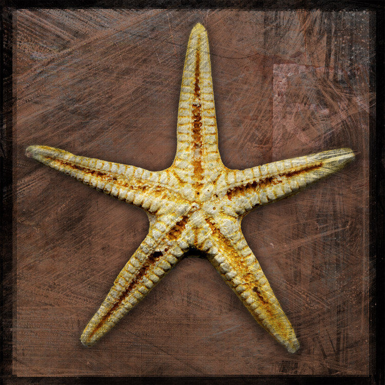 Starfish No. 2 - 8 in x 8 in Altered Photograph - product images