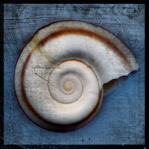 Snail,No.,2,-,8,in,x,Altered,Photograph,Art,Photography,Digital,surreal,nature,snail,shell,white,purple,gray,texture,altered,blue,paper,ink