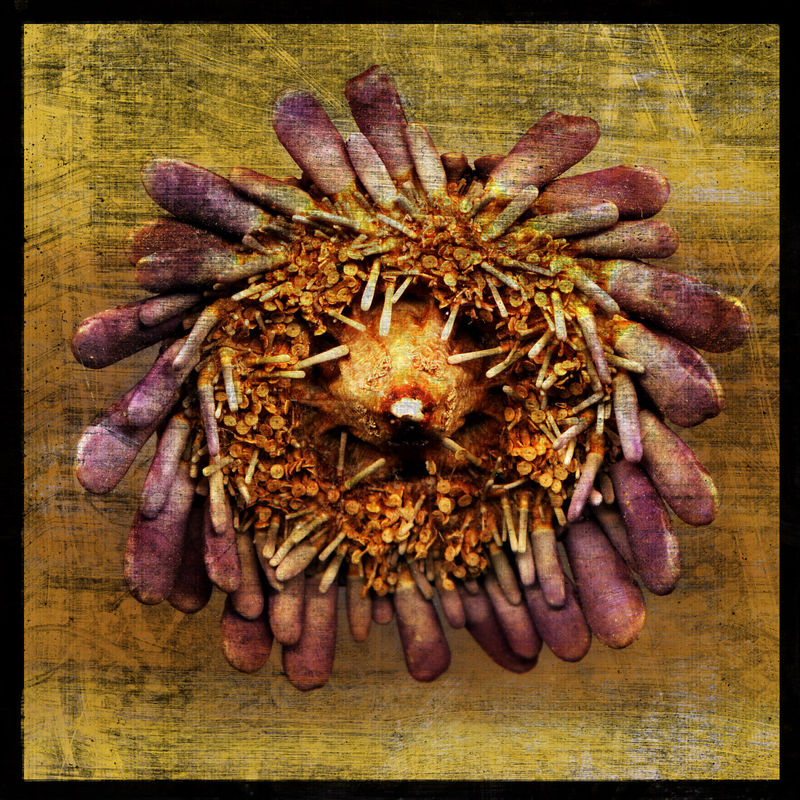 Sea Urchin No. 2 - 8 in x 8 in Altered Photograph - product images