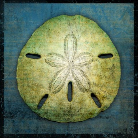 Sand,Dollar,No.,1,-,8,in,x,Altered,Photograph,Art,Photography,Digital,surreal,nature,texture,altered,seashell,white,sand_dollar,blue,paper,ink