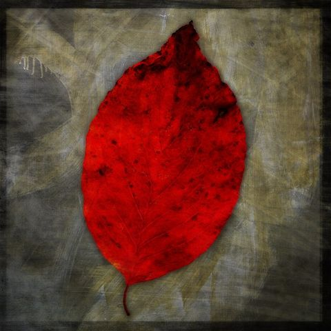 Red,Dogwood,Leaf,No.,1,-,8,in,x,Altered,Photograph,Art,Photography,Digital,surreal,nature,texture,altered,leaf,red,gray,dogwood,paper,ink