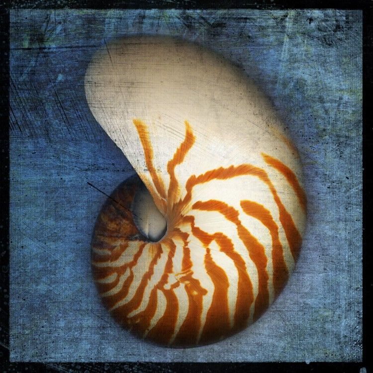 Nautilus No. 1 - 8 in x 8 in Altered Photograph - product images