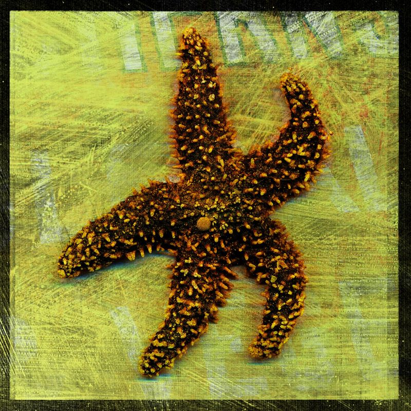 Starfish No. 1 - 8 in x 8 in Altered Photograph - product images
