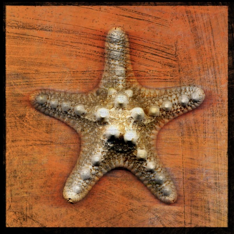 Armored Starfish -  No. 1 - 8 in x 8 in Altered Photograph - product images