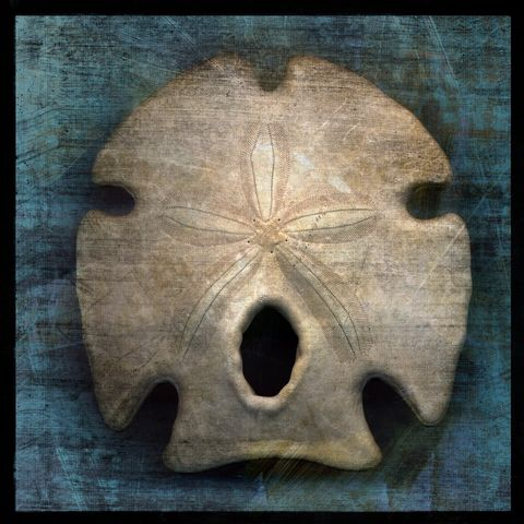 Arrowhead,Sand,Dollar,No.,1,-,8,in,x,Altered,Photograph,Art,Photography,Digital,surreal,nature,texture,altered,blue,white,seashell,sand_dollar,paper,ink