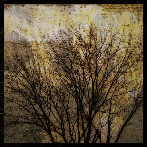 Trees,on,a,Peeling,Wall,-,8,in,x,Altered,Photograph,Art,Photography,Surreal,digital,brown,texture,moody,tree,nature,paper,ink