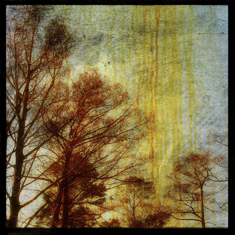 Drippy,Trees,8,in,x,Altered,Photograph,Art,Photography,Digital,surreal,tree,nature,moody,texture,paper,ink