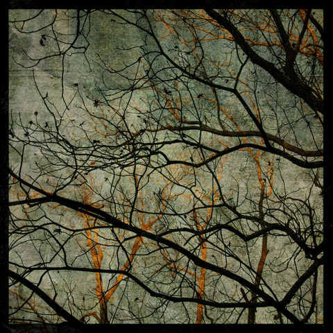 Coastal,Plains,Trees,No.,2,8,in,x,Altered,Photograph,Art,Photography,Surreal,digital,trees,blue,texture,nature,moody,paper,ink
