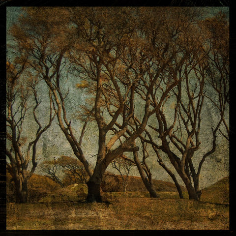 Battle,Acre,No.,1,8,in,x,Altered,Photograph,Art,Photography,Digital,nature,surreal,moody,brown,trees,texture,paper,ink