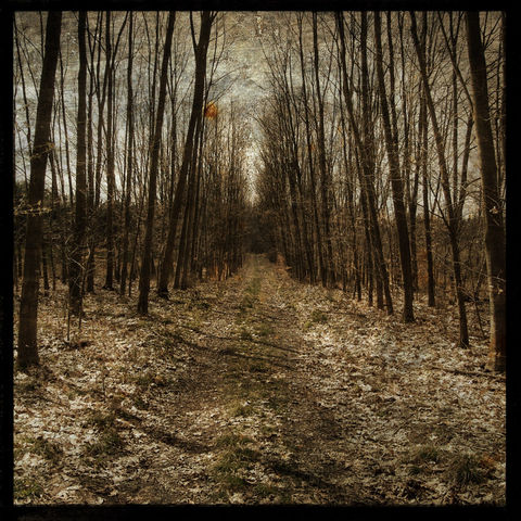 Photograph,Trees,-,Alsace,Forest,Path,No.,1,8,in,x,Altered,Art,Photography,Nature,surreal,digital,brown,texture,moody,path,france,europe,dreamy,Photograph_Trees,paper,ink
