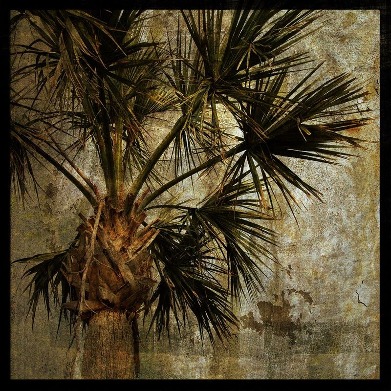 Palm Tree - Palm No. 3 - 8 in x 8 in Altered Photograph - product images