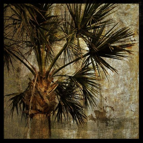 Palm,Tree,-,No.,3,8,in,x,Altered,Photograph,Art,Photography,Digital,surreal,green,brown,texture,altered,palm_tree,paper,ink