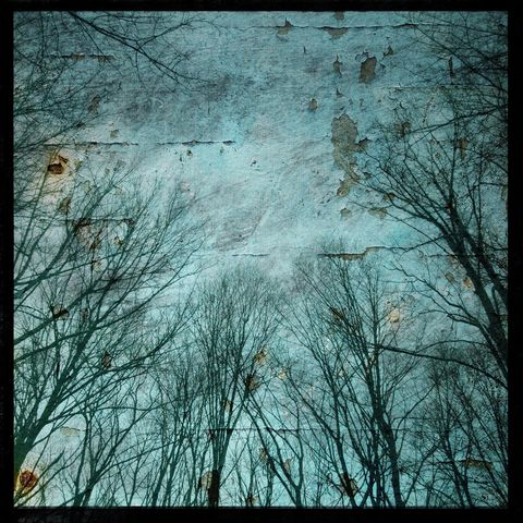 Nature,Photographs,-,Mountain,Trees,No.,1,8,in,x,Altered,Photograph,Art,Photography,digital,surreal,tree,trees,blue,texture,altered,nature_photographs,paper,ink