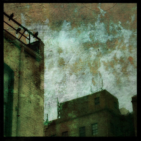 Bird,Photo,-,3,Pigeons,8,in,x8,Altered,Photograph,Art,Photography,Surreal,landscape,moody,altered,collage,brown,urban,digital,building,bird_photo,paper,ink