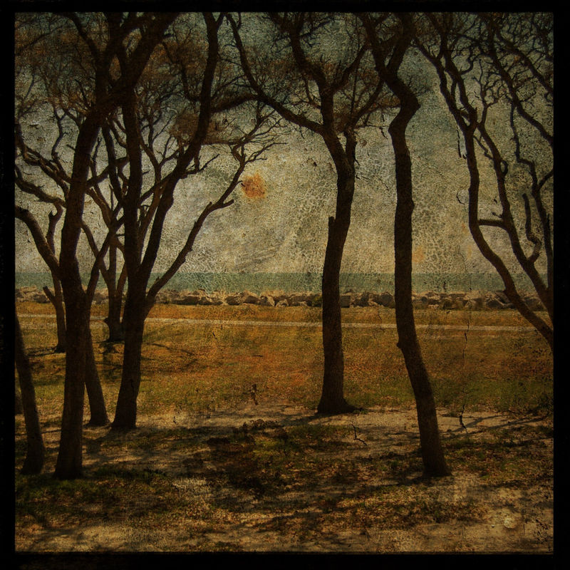 Fort Fisher Trees No. 2 - 8 in x 8 in Altered Photograph - product images