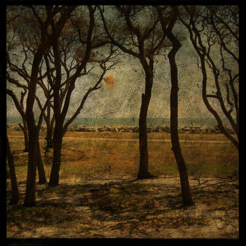 Fort,Fisher,Trees,No.,2,-,8,in,x,Altered,Photograph,Art,Photography,Nature,surreal,digital,trees,brown,texture,moody,paper,ink