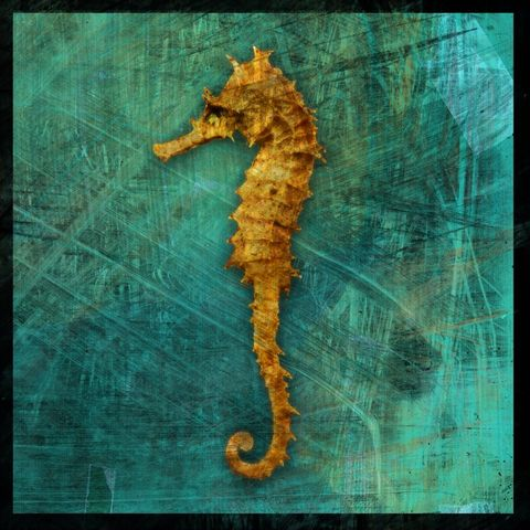 Sea,Horse,No.,1,-,8,in,x,Altered,Photograph,Art,Photography,Digital,surreal,nature,texture,altered,seahorse,ocean,green,gold,paper,ink