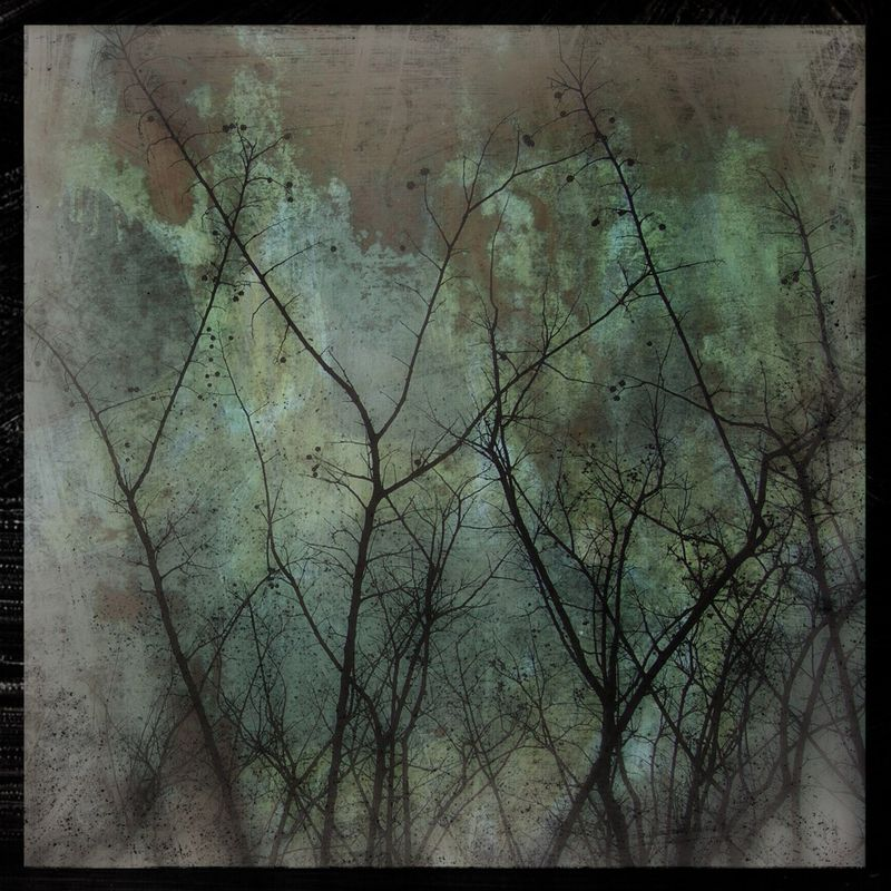 Myrtles on Copper  - 8 in x 8 in Altered Photograph - product images
