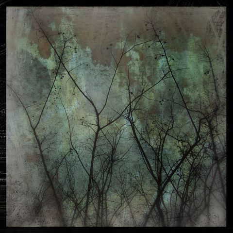 Myrtles,on,Copper,-,8,in,x,Altered,Photograph,Art,Photography,Digital,surreal,nature,tree,trees,gray,green,altered,texture,paper,ink