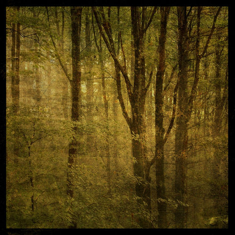Fog,in,Mountain,Trees,No.,1,-,8,x,Altered,Photograph,Art,Photography,Digital,surreal,nature,trees,fog,green,texture,moody,boone,north_carolina,mountain,paper,ink