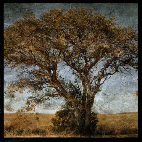 Causeway,Tree,-,8,in,x,Altered,Photograph,Art,Photography,Digital,surreal,nature,trees,tree,altered,brown,paper,ink