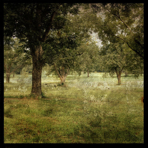 Grove,-,8,in,x,Altered,Photograph,Art,Photography,Nature,surreal,digital,trees,texture,moody,green,paper,ink