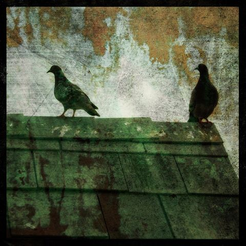 Two,Atop,-,8,in,x,Altered,Photograph,Art,Photography,Surreal,digital,brown,texture,moody,pigeon,rooftop,birds,bird,paper,ink