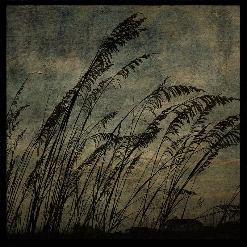 Sea Oats No. 2 - 8 in x 8 in Altered Photograph - product images