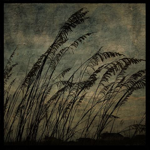 Sea,Oats,No.,2,-,8,in,x,Altered,Photograph,Art,Photography,Surreal,digital,brown,texture,moody,island,ocean,seaside,sand,sea_oats,beach,paper,ink