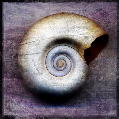 Moon,Snail,-,8,in,x,Altered,Photograph,Art,Photography,Digital,surreal,nature,snail,shell,white,purple,gray,texture,altered,paper,ink