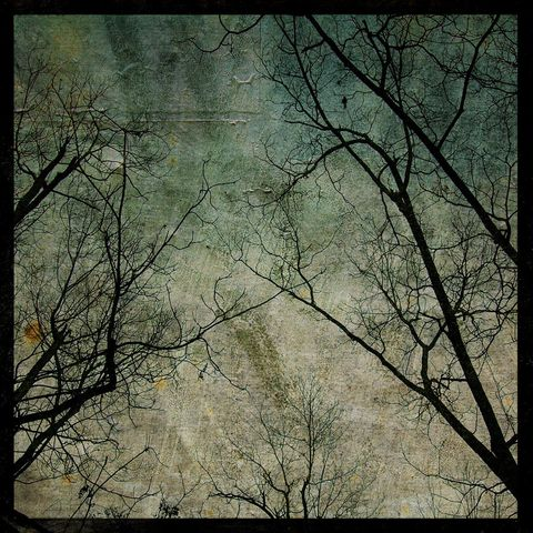 Coastal,Plains,Trees,No.,1,-,8,in,x,Altered,Photograph,Art,Photography,Digital,surreal,nature,trees,gray,sky,paper,ink