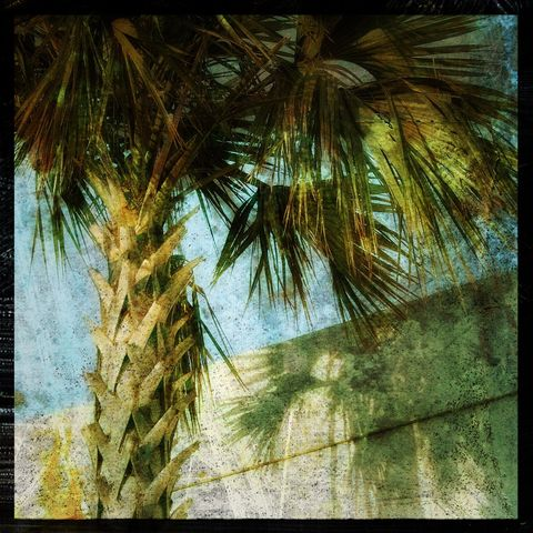 Palm,No.,2,-,8,in,x,Altered,Photograph,Art,Photography,Digital,surreal,palm,tree,nature,blue,green,texture,altered,paper,ink