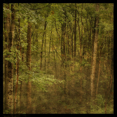 Fog,in,Mountain,Trees,No.,2,-,8,x,Altered,Photograph,Art,Photography,Nature,surreal,digital,altered,fog,mountain,trees,green,moody,texture,boone,north_carolina,paper,ink