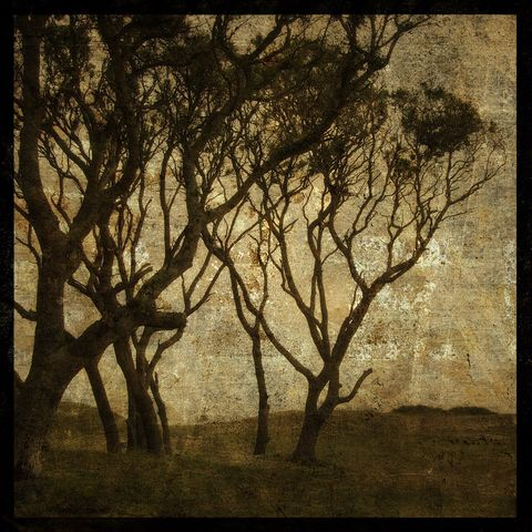 Sandswept,No.,3,-,8,in,x,Altered,Photograph,Art,Photography,Surreal,digital,brown,texture,moody,island,ocean,marsh,seaside,sand,tree,paper,ink