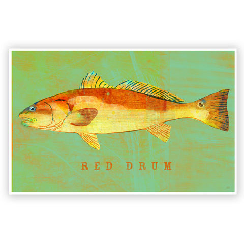 Red,Drum,Art,Print,-,Saltwater,Fish,8,x,12,or,6.5,18,Illustration,print,saltwater_fish_art,red_drum_art,paper