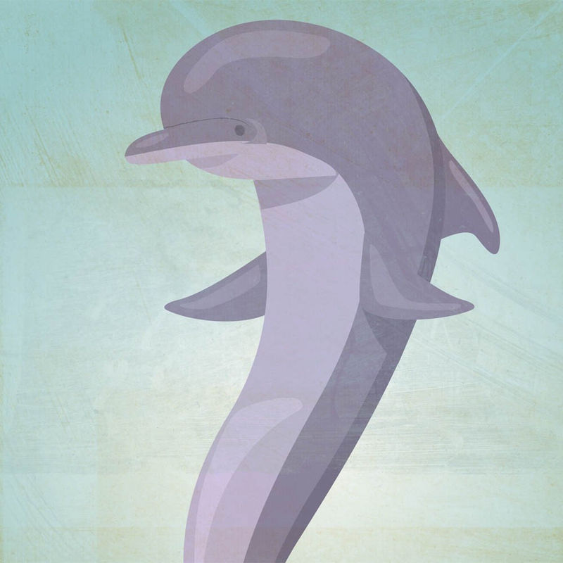 The Playful Porpoise Print 8.5 In X 11 In