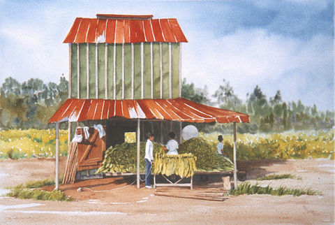 Summer,Wages,Limited,Edition,-,Sold,Out,farm,tobacco barn,tobacco,fields,workers,handing tobacco