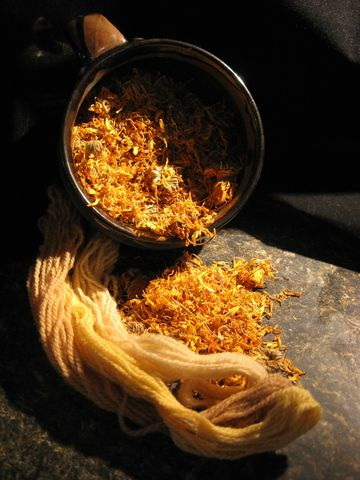 Calendula,Flowers,,officinalis,,Pot,Marigold,,Herb,and,Natural,Dye,flower, marigold , herb, dye , edible, colorant, vegan, Calendula , C officinalis , natural dye, yellow dye, pot marigold , BrushCreekWoolWorks,Brush Creek Wool Works